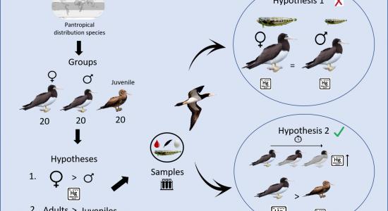 Egresso do PPG-CiAC publica estudo sobre mercúrio em aves marinhas de Macaé